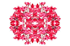 Group of red plumeria flowers Royalty Free Stock Photo
