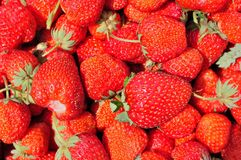 Group of red ripe strawberries Royalty Free Stock Image