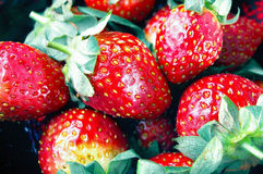 Group of red strawberries. In fruit bowl Stock Photography