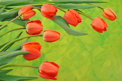 Group of red tulips Stock Image