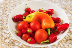 Group of red vegetable tomato,chilli pepper on plate. Pile of nice red vegetable with water drop - tomato and small chilli pepper on white plate on bamboo mat Stock Photography