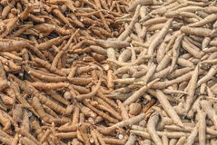 Group of red and white cassava Stock Images