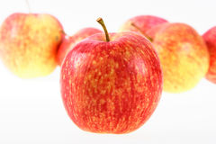Group of red-yellow apples. Royalty Free Stock Photo