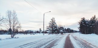 Reindeers crossing a road royalty free stock images
