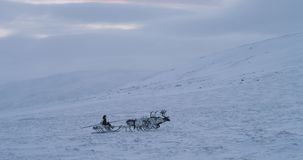 Group of reindeers with a Siberian man with a sleigh have a ride through the snow field in the middle of Arctic tundra. stock video footage