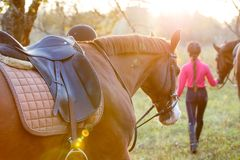 Group of rider girls walking with horses in park Royalty Free Stock Photo