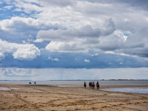 Group riding horses in the wadden sea Stock Photography