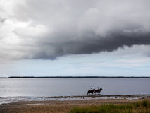 Group riding horses in the wadden sea Stock Images