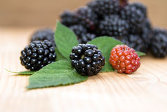 Group ripe blackberry Royalty Free Stock Photos