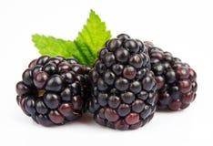 Group Ripe Blackberry Royalty Free Stock Photo