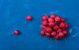 Ripe fresh radish. Group of ripe fresh radish on blue background Royalty Free Stock Images