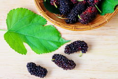 Group of ripe mulberries. Royalty Free Stock Image