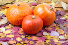 Group of ripe pumpkins on autumn leaves Royalty Free Stock Images
