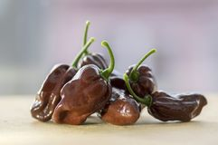 Group of ripened capsicum chinenses very hot peppers on wooden table, Habanero chocolate. Ingredient stock photos