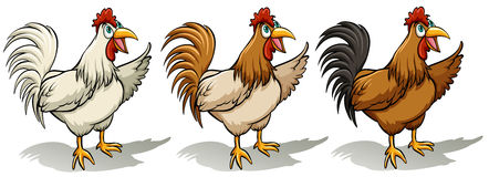 Group of roosters Royalty Free Stock Image