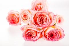 Group of rose isolated on white background Stock Image