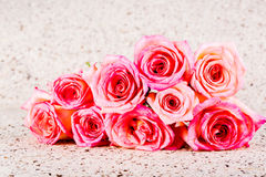 Group of rose isolated on white background Royalty Free Stock Photography