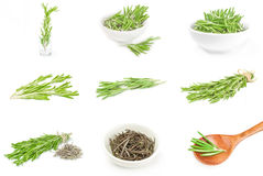 Group of rosemary isolated over a white background Royalty Free Stock Photos