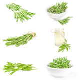 Group of rosemary over a white background Stock Images