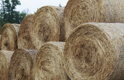 Group of Round hay bales Royalty Free Stock Image