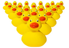 Group of rubber duckies. Group of typical plastic yellow rubber ducks Stock Photo