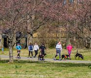 Group of runner and Thier Pets at the annual Roanoke Valley SPCA 5K Tail Chaser. Roanoke, VA – March 23rd: A group of runner and their dogs at the annual stock image