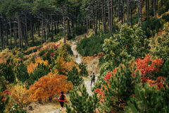 Group runners run descend from mountain. During a sports race. autumn forest, yellow and red leaves on trees Stock Photography