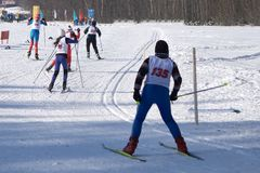 Group 5 runs skiing coming to the finish line in the snow Christmas tree Forest on a beautiful Sunny day.  Stock Images