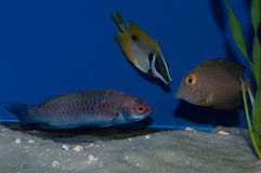 Group of Saltwaterfish Royalty Free Stock Photo