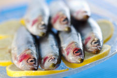Group of sardines on lemon slices Royalty Free Stock Photography