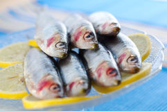 Group of sardines on lemon slices Royalty Free Stock Photos