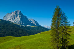 Group Sassolungo and forest, Dolomites. Sassolungo panoramic view, Dolomites - Italy royalty free stock photo