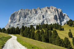 Group Sassolungo, path and forest, Dolomites Royalty Free Stock Photography