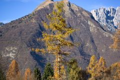Autumn on Mount Serva, Belluno, Dolomites Stock Photography