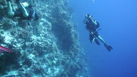 Group of scuba divers ascending on water surface in Egypt stock video