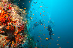Group of scuba divers exploring coral reef Stock Image