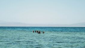 A group of scuba divers go diving in red sea, sunny day and clear water in Dahab, Egypt, 4k