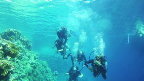 Group of Scuba divers underwater. Red Sea, Egypt. stock footage