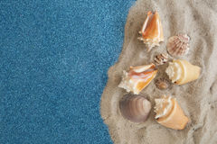 Group of sea conchs and shells placed on beach sand and shiny br Royalty Free Stock Photos