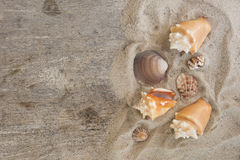 Group of sea conchs and shells placed on beach sand and wooden t Stock Photo