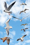 Group of sea gulls Stock Image