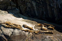 Group of Sea Lions on Rock Stock Photo