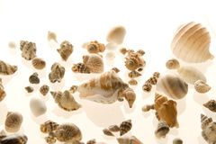 Group of sea shell isolated on white. Background Stock Image