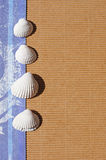 Group of sea shell Stock Photo