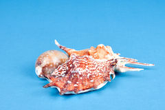 Group of sea shells Royalty Free Stock Photography