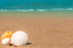 Group of sea shells in the corner of  frame Stock Photos