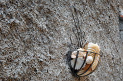 A group of sea shells hanging on the wall Stock Photos