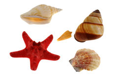 Group of sea shells with starfish Stock Image