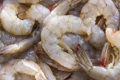 Group of sea shrimp Stock Image