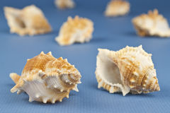 Group of sea snails Stock Photo